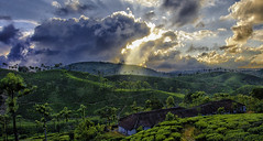 Beautiful Evening (SSiva_007) Tags: trees sunset sky cloud sun house tree green clouds evening scenery estate hills rays sunrays teaestate valparai