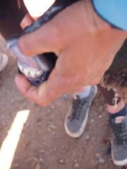 P4162106 (t_y_l) Tags: morocco marokko tinghir suq 2016 tinerhir