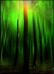 enchanted forest (Frank//) Tags: trees motion green ice forest europe sony arrested icm frnk