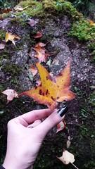 folha (Natalia Sapienza) Tags: musgo verde azul brasil do laranja vermelho amarelo paulo folha sao floresta campos marrom lilas jordo camposdojordao breto