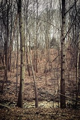 (rowjimmy76) Tags: cameraphone trees winter nature nova forest outdoors virginia woods dreary wooded iphone6