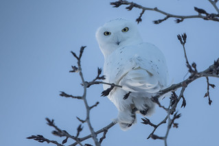 Whoooo are you looking at