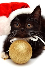 Merry Christmas 2! (Dona Minúcia) Tags: black cute art animal cat ball arte noel preto gato feliznatal bola merrychristmas fofo gracinha