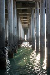 Piering Around Part 2 (EvanJawnson) Tags: ocean blue light green bird beach birds 50mm pier sand nikon seagull pillar barnacles streaks d5200