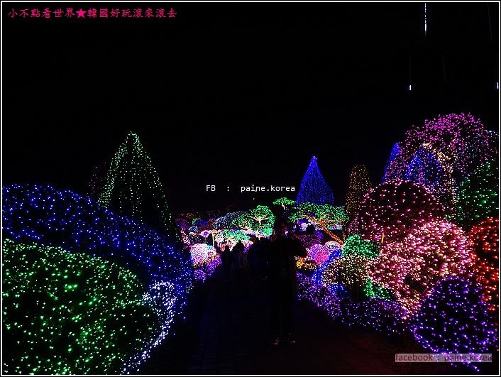 晨靜樹木園 五色星光庭園展 (42).JPG