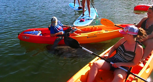12_29_15  kayakpaddleboard tour Lido Key Florida 19