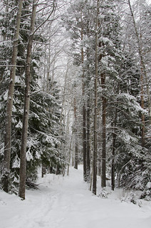 ♫ ♪ Walking in a winter wonderland ♫ ♪