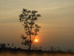A dreamy evening (Rhivu_Ray) Tags: sunset india west tree evening dream dreamy bengal kharagpur virtualpresence sunsetcolor idream treeinsunset medinipur westmedinipur flyingfreely dreamyevening rhivu adaytocherish