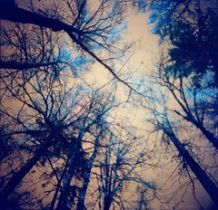 """""""And the stars look very different today..."""" (liquidnight) Tags: trees oregon analog mediumformat lomo lomography thankyou mourning turquoise toycamera surreal lookup diana mementomori dreamy analogue dianaf vignetting treescape grief davidbowie dreamscape heartbroken wildernesspark filmphotography willamettevalley spaceoddity stayton andthestarslookverydifferenttoday lomochrome lomochrometurquoise lomochrometurquoisexr100400 valedavidbowie ripdavidbowie"""