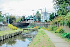 _MG_7146 (WayChen_C) Tags: saitama kawagoe  saitamaken    kawagoeshi