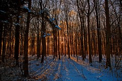Gold (Threin Ottossen) Tags: trees winter sunset plant tree forest landscape denmark golden outdoor serene lolland abigfave allaboutsun earthnaturelife
