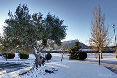 IMG_2016_01_16_4867 (gravalosantonio) Tags: huesca nieve invierno olivos peña jaca oroel jacetania