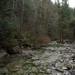 Rio cristalino e floresta de musgos