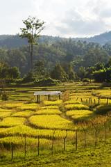ChiangMai_7575 (JCS75) Tags: canon thailand asia chiangmai asie thailande