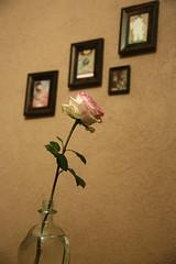 Only Roses (berinamusa) Tags: art classic rose wall vintage interior room kunst frame ros deko