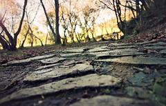 (Sol Z.B.) Tags: park parque wet camino path stones rocas piedras hmedo