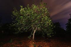 Garrober (carmenvillar100) Tags: nightphotography arbol ibiza eivissa nocturnas algarrobo d90 santagertrudis nikond90 campoibicenco camposdeibiza garrober