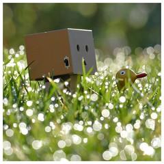 Morgenstund hat Gold im Mund - Danb (steffi's) Tags: grass japan toy duck manga dew merchandise gras tau ente spielzeug figur yotsuba danbo wellpappe objectphotography danbooru danboard kiyohikoazuma  kartonmnnchen danb kartonschachtelroboter
