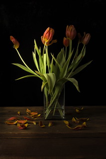 Red Tulips Wilted