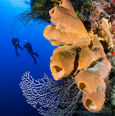 """""""Ghost Mountain"""" dive site, North Wall (WhitcombeRD) Tags: ocean life travel blue sea vacation holiday fish coral island islands healthy marine warm underwater grand scuba diving clear tropical caribbean cayman reef grandcayman isley divetech sidemount"""