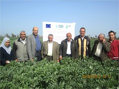 Nice FB field with Happy Scientists (ICARDA-Science for Better Livelihoods in Dry Areas) Tags: farmers northafrica climatechange mena pulses ifad nutrition resilience drylands icarda incomes westasia croprotation seedsystems conservationagriculture euifad wheatlegumecroppingsystems