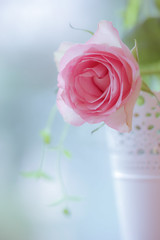 A Little Pink Rose (paulapics2) Tags: pink floral rose soft