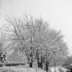Snowy tree (rotabaga) Tags: blackandwhite bw göteborg diy lomo lomography sweden gothenburg sverige tmax400 lubitel166 svartvitt r09 bwfp