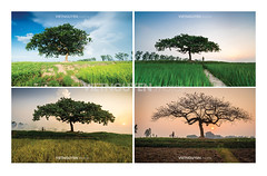Four seasons (:: Focus Studio ::) Tags: life road wood morning light sunset red summer sky orange sun sunlight mist lake abstract black tree nature water field silhouette misty fog rural forest sunrise landscape outdoors evening amber countryside early spring twilight haze oak scenery alone glow desert sundown path foggy scenic poland dry trunk environment lonely