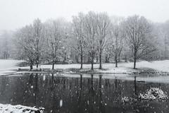 L1010530 Winter Pond (idunavision) Tags: leica trees bw snow germany snowflakes pond sw snowfall teich bäume bielefeld beechtrees buchen schneefall ostwestfalenlippe schneeflocken
