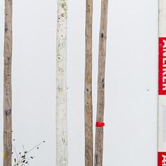 one tree, a tripod, anliker (zeh.hah.es.) Tags: red white tree rot fence schweiz switzerland construction beige zurich baustelle zrich zaun constructionsite weiss baum kreis5 bauzaun heinrichstrasse