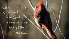 Ezra 8:22 (rdedks2011) Tags: bird jw cardinal bible scripture redbird jehovahswitnesses scripturecard