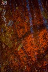 Under the Microscope: Chilli Flake (Trav_Hale) Tags: images radical chilli microscope lightroom solanaceae capsaicin chillipepper underthemicroscope heliconfocus chilliflake capsicium nikond5300 underthemicroscopechilli whatdoeschillilooklikeunderthemicroscope chillifocusstackraw