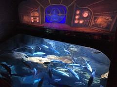 Zone Nautilus (stefff13) Tags: paris france aquarium requin poisson nautilus trocadro mduse