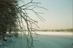February: Frosty branches, Siilinjrvi (tuomas.mutanen) Tags: film nikon kodak iso e series mm f18 50 portra nikkormat 160 ft2