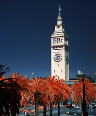September 2015 (f-auto) Tags: sanfrancisco clocktower palmtrees embarcadero bayarea infrared ferrybuilding portofsanfrancisco