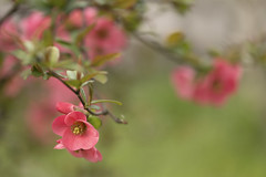 Quanti colori ha la primavera...? (Ale*66*) Tags: primavera nature spring bokeh natura colori blooming sfondo sfumature fioritura