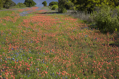 Llano Texas Wildflowers 4A (Largeguy1) Tags: blue orange canon landscape texas purple approved wildflowers reds llano 5dsr