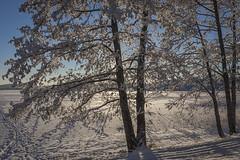 Wintry Vinlnniemi in Kuopio 1 (JP Korpi-Vartiainen) Tags: park street trees winter house snow cold building tree finland landscape living scenery frost january sunny frosty arctic talo lumi talvi maisema koti tammikuu puisto wintry rakennus kaupunki asuminen puut katu huurre kylm aurinkoinen pakkanen omakotitalo 21c talvinen omakoti arktinen huurteinen omakotialue huurteiset jpkorpivartiainen2015
