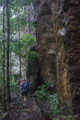Walking under the cliff (NettyA) Tags: cliff track australia bushwalking qld queensland bushwalk springbrook goldcoasthinterland 2016 springbrooknationalpark scenicrim bushwalkers seqld warriecircuit scbwc sonya7r