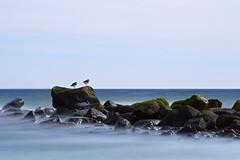 Two seabirds (belimbach) Tags: strand langzeitbelichtung dahme canonef70200mmf28lusm leefilter vögel bildtyp fotoeigenschaften 06nd persönlich bigstopper