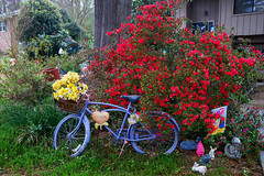 Visual Ode To Color (redhorse5.0) Tags: flowers blue plants nature bicycle garden spring azaleas sonya850 redhorse50