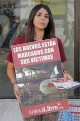 Acto Informativo Centro de Quilpue 19/03/16 (Animal Libre Chile) Tags: vegan activism valparaso viadelmar vegana quilpue veganismo quintaregion animallibre activismoanimal animallibreequipovalparaso