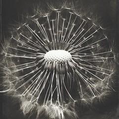 Dandelion (sole) Tags: flowers bw flower macro nature closeup sepia vintage dandelion bnw macrophotography sole carmengonzalez