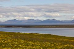 Nkym vuonolle (ikithule) Tags: flowers sea summer mountains clouds landscape iceland meri maisema kes pilvet keto kukkia vuono vuoristo vuoret jannemaikkula ikithule