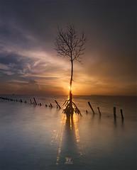 I will Grow (Jose Hamra Images) Tags: sunset sunrise indonesia landscape jakarta tangerang banten teluknaga flickrbronzetrophygroup
