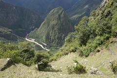 Inca trail 1090939 (Yori Hirokawa) Tags: machu picchu inca trail machupicchu