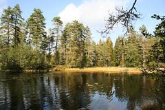 Left_Overs 062.21, Tvillingtjenn, Norway (Knut-Arve Simonsen) Tags: autumn fall norway norge norden norwegen noruega scandinavia norvegia stfold stlandet viken norvge  srnorge     borgarsyssel   smaalenene  sydnorge   vingulmark tvillingtjenn