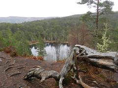 Viewpoint, Dog Falls Trail, Glen Affric, March 2016 (allanmaciver) Tags: trees dog tree wet grey scotland highlands high falls glen trail loch split lochan affric allanmaciver