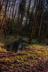 Impressionen aus einem Waldlauf (alexschneider72) Tags: wood city blue red sky snow water germany stars happy bayern deutschland abend wasser sommer natur himmel wolken fluss pilze holz kalt sonne wald schlamm friedberg waldweg kiesweg frh nachmittag pftzen steinweg
