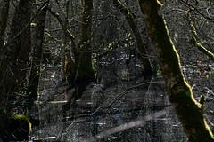 Rserve naturelle du Marais des Monod, district de Morges, Vaud, Suisse (jubjubjub000) Tags: schweiz switzerland suisse swamp marsh marais naturelle flooded vaud morges pronatura waadt rserve